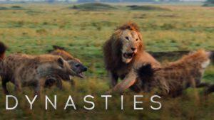 BBC Earth – Lev napaden smečkou hyen