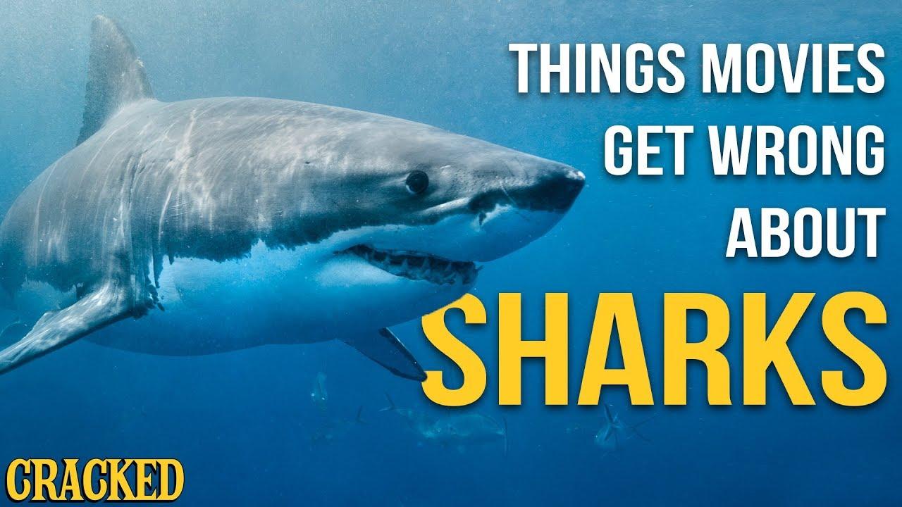 Co je ve filmech hovadina: Žraloci