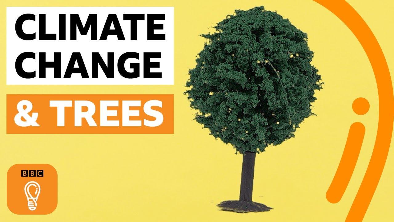 Co kdyby každý člověk zasadil strom?