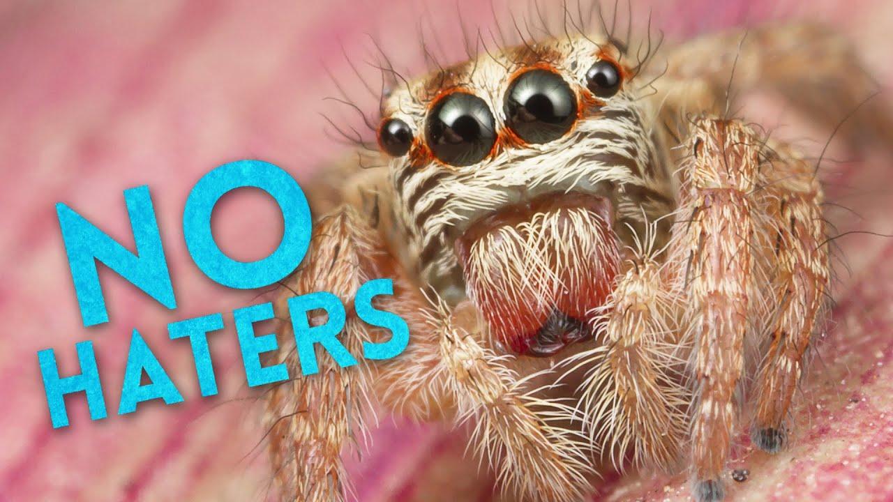 Co kdyby zmizeli pavouci?