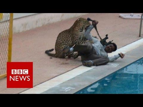 Leopard na útěku