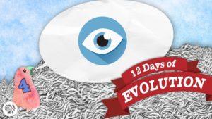 Mohla evoluce stvořit oko?