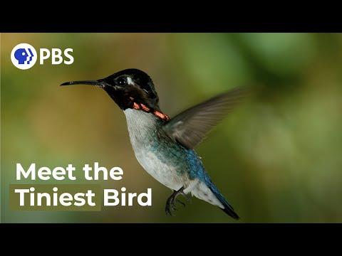 Nejmenší ptáček na světě