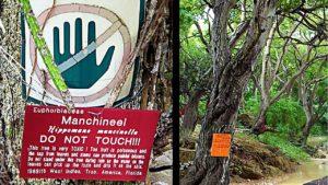Nejnebezpečnější strom na světě