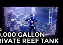 Největší domácí akvárium