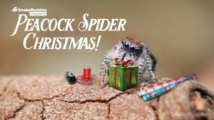 Pavouci vám přejí hezké svátky