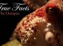 Pravdivá fakta o chobotnici