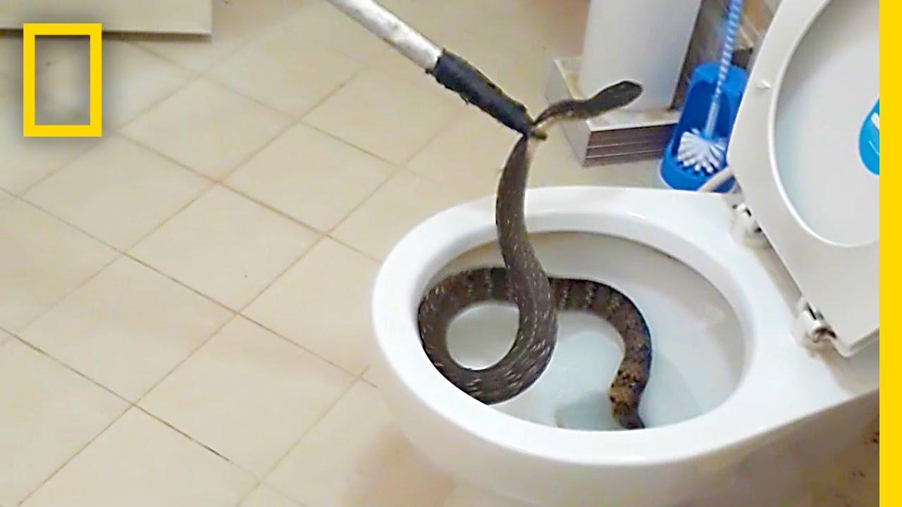 Překvapení v záchodě