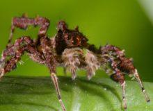 Tenhle pavouk je borec!