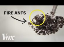 Tihle mravenci jsou nejen hmyz, ale i materiál