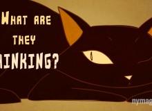 Vaše kočka s vámi mluví