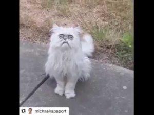 Zkurveně divná kočka!